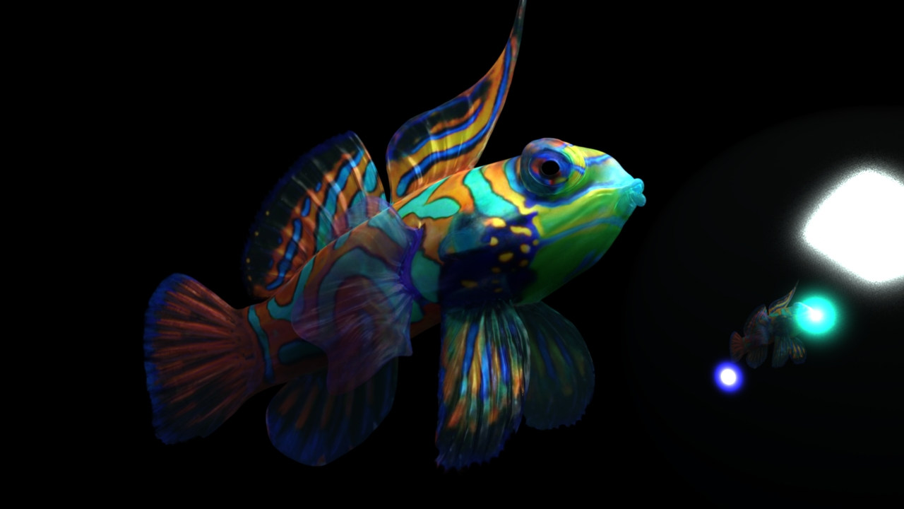 synchiropus splendidus 3d alpha